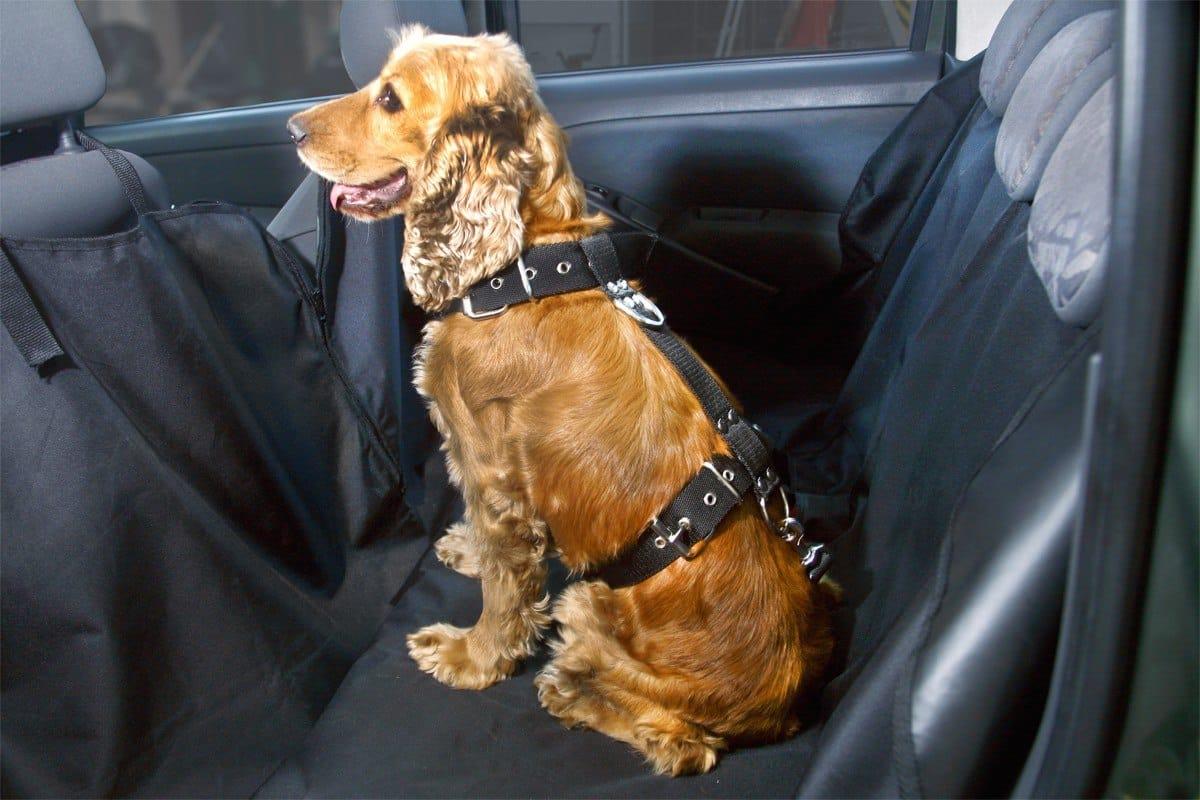 requisitos para el traslado de mascotas en el auto