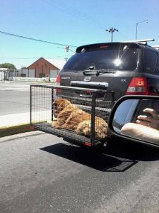 ASI NO. Usar una jaula como paragolpe pone en riesgo la vida del animal, además de ser un acto de crueldad para el mismo.