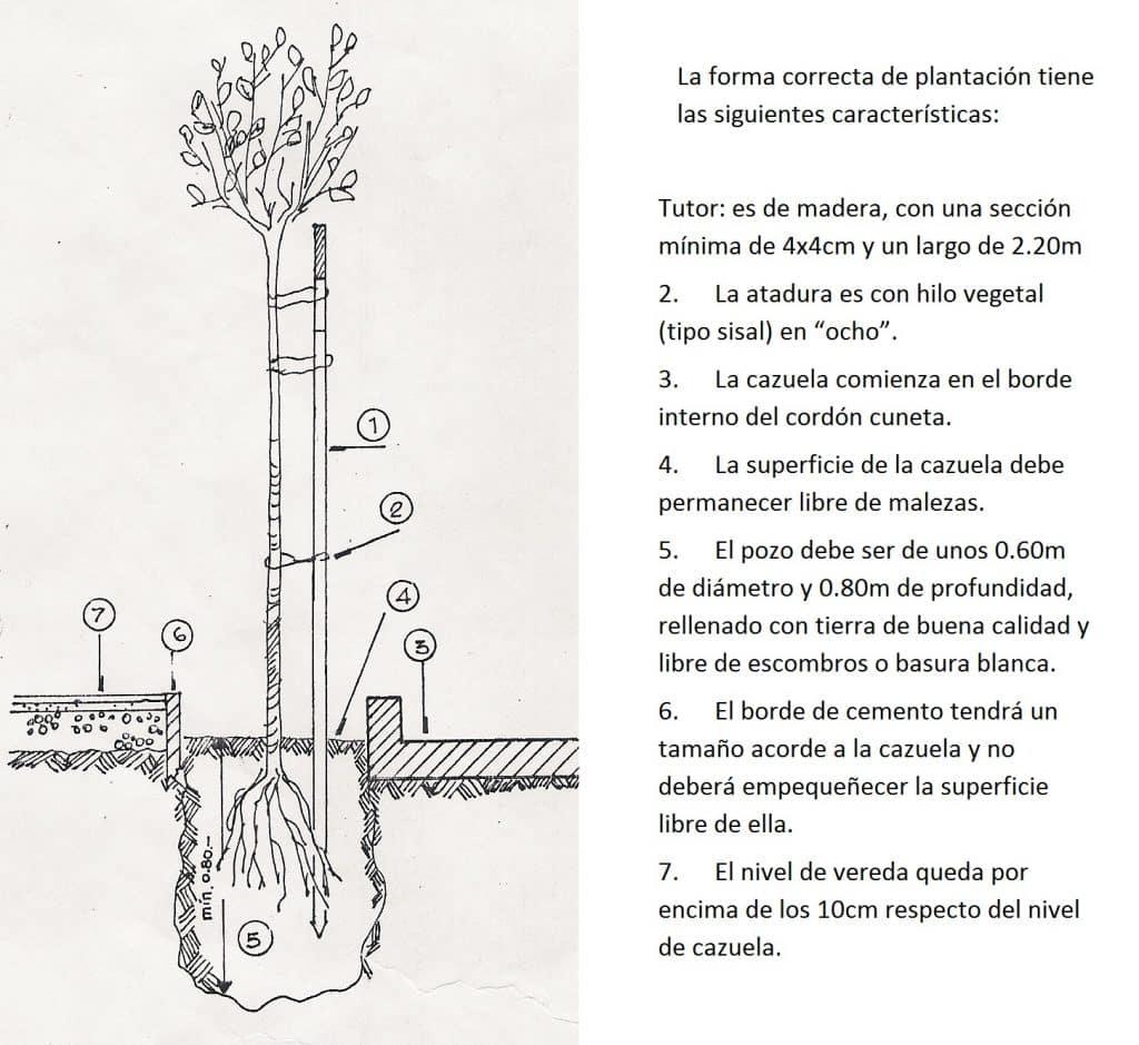 como plantar un arbol en cordoba